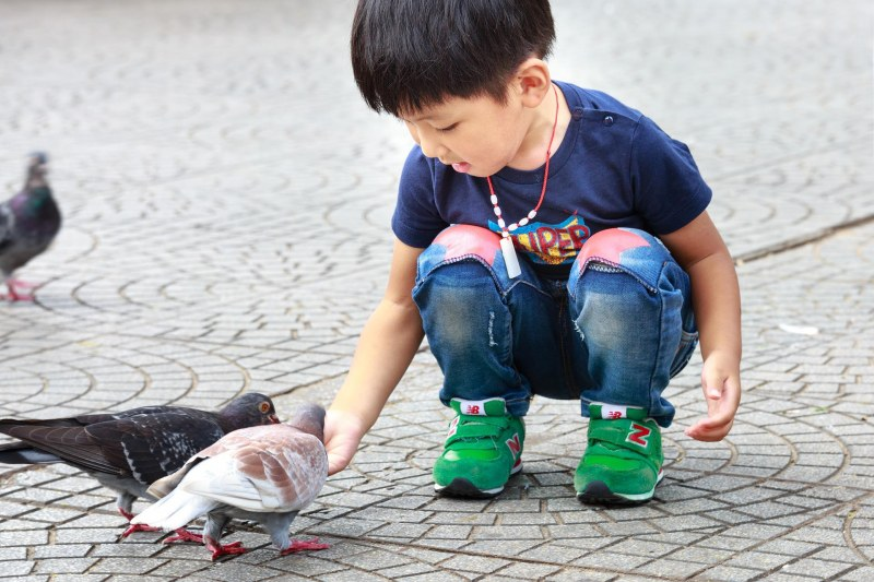 Young boy feeding pigeons